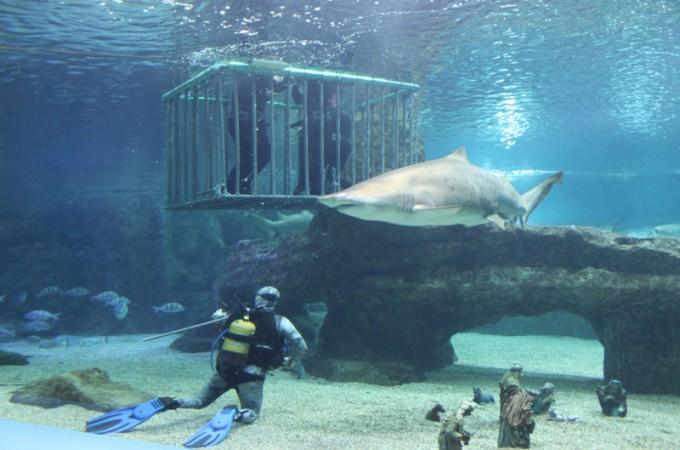 Nos vamos al aquarium de roquetas ar hoteles Aquarium en roquetas de mar